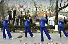 刘荣广场舞寒号鸟正面背面演示教学 邵洪《寒号鸟》歌词MP3下载
